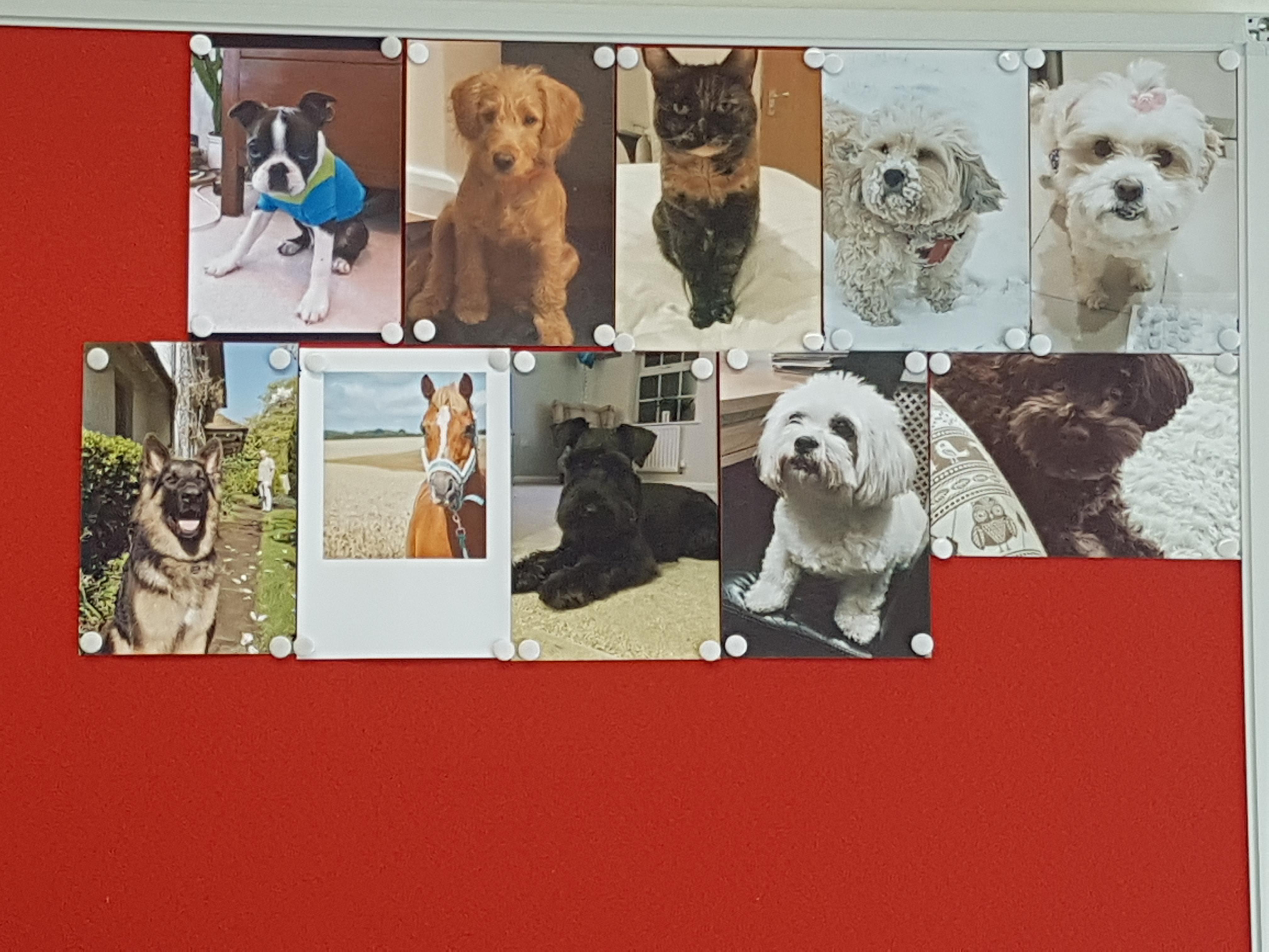 dog-wall